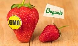 GMO and Psoriasis
